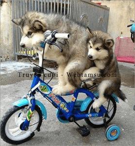 Đi xe đạp cùng người yêu